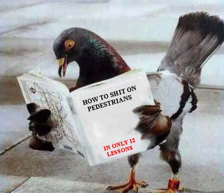 Pigeon reading a book