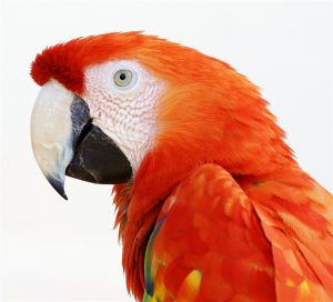 Orders of the Parrot